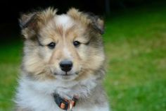 Why Is My Dog's Poop White? Canna-Pet® white color in poop - White Things Treatment For Heartburn, Acid Reflux In Babies, Shetland Sheepdog, Dog Care Tips, Dog Training Tips, New Puppy, Happy Dogs, Green Colors, Dog Cat