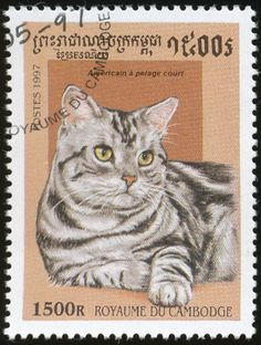 Cambodia 1997 Cat Stamps - American Shorthair