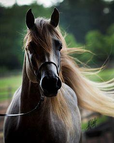Sidsaki - pretty name for a gorgeous horse!