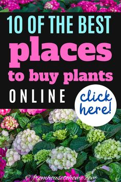 When you can't go shopping for outdoor plants in person, try having them delivered from one of these online nurseries. Whether you are looking for perennials, bushes or trees, you can find what you want from mail order nurseries. Order Plants Online, Mail Order Plants, Plants That Love Shade, Shade Plants, Sun Plants, House Plants, Trees And Shrubs, Trees To Plant, Amigurumi