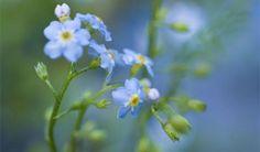Top 10 pond plants - Features: Plants - gardenersworld.com