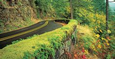 Oregon's Most Beautiful Drives & Day Trips | Travel Oregon {this is the scenic byway to Multnomah Falls}