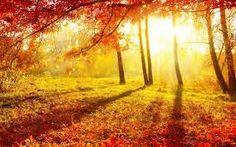 Výsledek obrázku pro beautiful forest sun