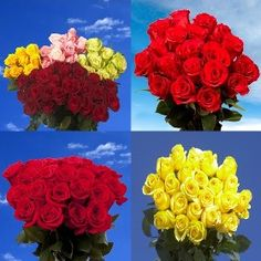 Fresh Cut 50 Red and 50 Assorted Roses Flowers Today, Cut Flowers, Fresh Flowers, 100 Roses, Best Roses, Colour List, One Color, Mothers Day Roses, Love Rose