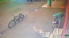 """""""O Grito do Bicho"""": Homem rouba vasilhas de cachorro que sobrevive na ..."""