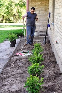 DIY Landscaping to Boost Curb Appeal An easy, affordable, and quick DIY landsc. DIY Landscaping to Boxwood Landscaping, Hillside Landscaping, Outdoor Landscaping, Front Yard Landscaping, Landscaping Ideas, Landscaping Borders, Luxury Landscaping, Landscape Plans, Landscape Design