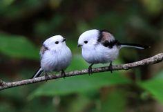 Funny Birds, Cute Birds, Pretty Birds, Bird Pictures, Animal Pictures, Pretty Animals, Cute Animals, Japanese Bird, Most Beautiful Birds