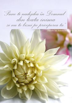 #citat #speranta #inima #citatortodox #jurnalcuflori #citate Flower Qoutes, People Quotes, Best Quotes, Blog, Spirituality, Place Card Holders, Christian, Disney, Flowers