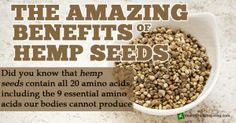 """HempSeedsAmazingBenefits,according to some experts, the abundant consumption of hempseed, deemed a """"super food"""" due to its richness in essential fatty acids (EFAs) Omega 3 and 6, is what makes Bama Yao one of five locations on Earth where many inhabits live to more than 100 years old - See more at: http://hemp.org/news/content/china-hempseed-eating-village-home-some-oldest-healthiest-people-earth#sthash.SOEW2rUH.dpuf"""