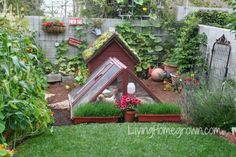 RAISE: Backyard chickens - The biggest concerns from Living Homegrown blog