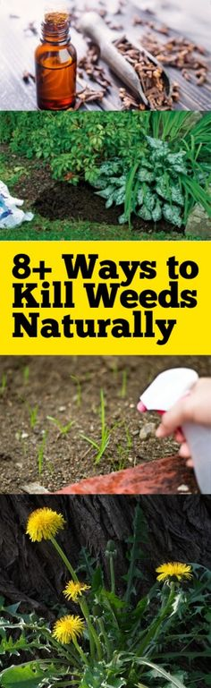 Natural pest control, pest control, weed control, natural weed control, popular pin, kill weeds natural, weed control, gardening tips, popular gardening ideas, gardening