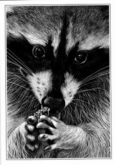 scratch board animals | Wildlife - The Painting & Scratchboard Art of Judith Edwards-White