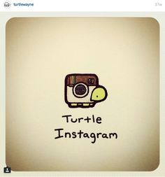 Instagram Cute Turtle Drawings, Turtle Sketch, Cute Turtle Cartoon, Kawaii Turtle, Cute Cartoon, Cute Drawings, Sweet Turtles, Cute Turtles, Baby Turtles