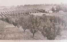 Mr Finger's citrus plantation, Doncaster, 1912 Melbourne Victoria, Victoria Australia, Old Photos, Vintage Photos, Melbourne Suburbs, Old Maps, Historic Homes, Historical Photos, Cool Pictures
