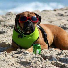 Beach Boxer!