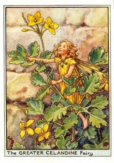 Greater Celandine Flower Fairy Vintage Print by Cicely Mary Barker, first published in London by Blackie, 1948 in Flower Fairies of the Wayside.