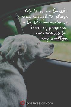 Losing A Dog Quotes Grief Rainbow Bridge Pet Loss Pet Quotes Dog, Pet Loss Quotes, Dog Quotes Love, Animal Quotes, Dog Death Quotes, A Girl And Her Dog Quotes, Dog Qoutes, Rescue Dog Quotes, Best Dog Quotes