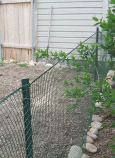 how to build a cheap temporary vegetable garden fence yahoo voices voices