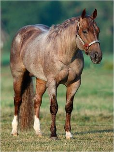 Red Roan Horse | La Beℓℓe ℳystère