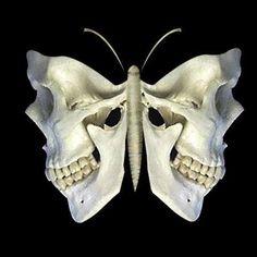 skull butterfly or moth