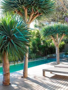 Modern design of long pool with palm trees that grow through the wood patio - dream place to relax!