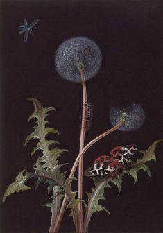 botanical illustration dandelion