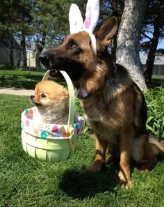 Share of the day:     Easter Puppys...
