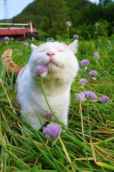 Yes, plants are fun to have in the house and your kitty may absolutely love the greenery. But remember, a surprising number of household plants are actually toxic and life-threatening to your kitty. cute cat and kittens I Love Cats, Crazy Cats, Cute Cats, Funny Cats, Fun Funny, Daily Funny, Kittens Cutest, Cats And Kittens, Ragdoll Kittens