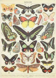 vintage butterflies poster