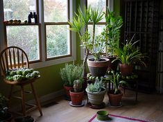 Pop quiz: which is more polluted, indoor air or outdoor air? 10 times out of indoor air in your house, office or apartment is going to be worse. Here are some house plants that clean air and are nearly impossible to kill Hydroponic Gardening, Container Gardening, Gardening Tips, Indoor Gardening, Organic Gardening, Garden Plants, Indoor Plants, Air Plants, Potted Plants
