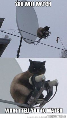 Satellite Cat…