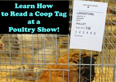 The Chicken Chick®: Virtual Poultry Show! A Day at the ...