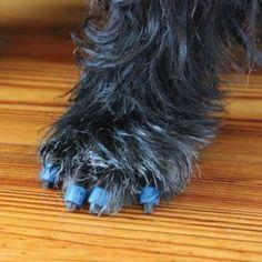 toegrips for senior dogs...helps provide traction on hardwood floors