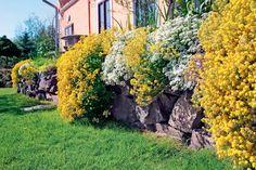 Blühende Polsterstauden bedecken im späten Frühling in ganzen Teppichen Böschungen, Mauern und Steingärten. Welche Pflanzen sich für einen farbenfrohen Blütenteppich eignen, wie sie kombiniert werden und auf was Sie achten sollten, erfahren Sie hier.