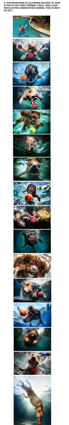 I don't know why dogs in water gets me so, but it does.