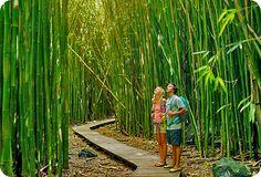 Turismo Verde  La foresta di Bambù gigante Onlymoso è uno degli spettacoli della natura più pittoreschi e si presta a nuove forme di turismo verde con un meraviglioso giardino esotico che si presta particolarmente al relax e al passeggio.  In un bambuseto è possibile realizzare vari sentieri immersi in una vegetazione molto fitta formata dalle canne di bambù che possono raggiungere i 15 cm di diametro e i 25 mt di altezza.  I viali riposanti, fiancheggiati da alte piante di bambù creano…