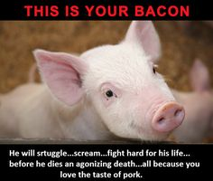 ANIMALS ARE SENTIENT BEINGS!
