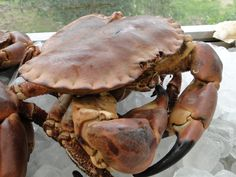 The Crab Shack is a new pop up restaurant at the Hell Bay Hotel with fresh crab as the star attraction. Call 01720 422947 for bookings.