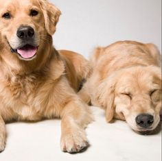 my own puppies! Aspen & Copper