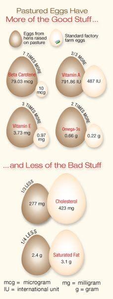 Fresh Farm Eggs vs Store Bought Eggs