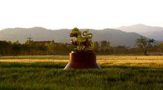Singha Beer Farm and Park, Thailand.. Singha Beer, Boon Rawd Brewery, Thailand. http://islandinfokohsamui.com/