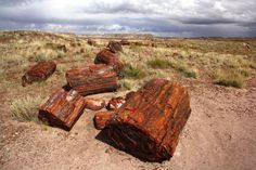 General park information for Petrified Forest National Park, including hours of operation, where to stay, and when to visit.