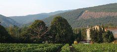 Domain de Majas Vineyard, Outdoor, Outdoors, Vineyard Vines, The Great Outdoors