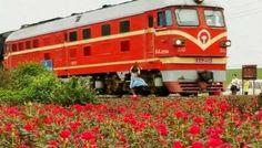Selfie di fianco ai binari: 19enne cinese muore investita dal treno