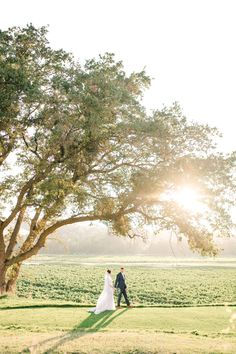 Virginia & Destination Wedding Photographer >> Anna Kardos Photography specializes in Sophisticated, Romantic, and Classic photography. Livermore California, California Wine, Classic Photography, Vineyard Wedding, Wine Country, Shades Of Grey, Destination Wedding Photographer, Summer Wedding, Virginia