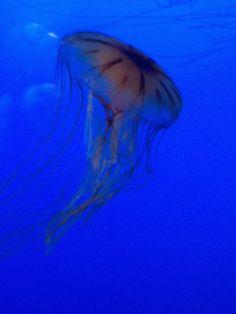 boston aquarium, jellyfish