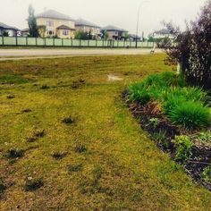 #green #grass #Spring  #yeg #IGyeg #photography #photooftheday
