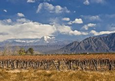 Mendoza, Argentina.  It's only Less Traveled for those who haven't been there.  We LOVED Mendoza.