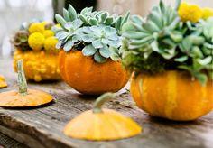 Succulents inside a pumpkin