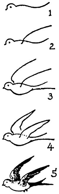 Drawing Swallows and Birds from the Side View in Simple Steps